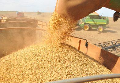 Soja: Com preços elevados, produtor retoma negociação