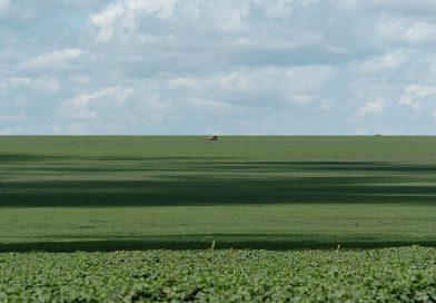 'Status de maior produtor de soja do mundo será do Brasil em 2020'
