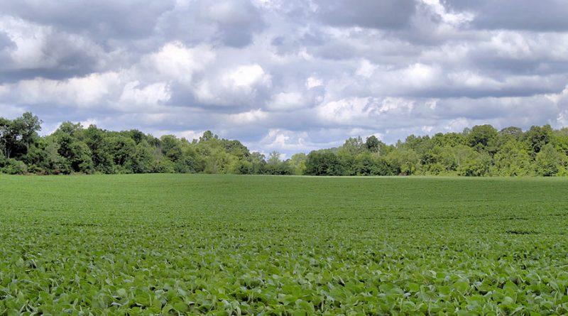 Uso de terras como garantia a estrangeiros deve estimular financiamentos