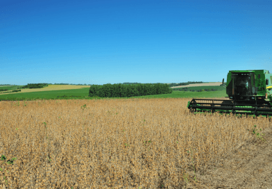 Oeste paranaense já alcança a média de 75 sacas/ha nos melhores talhões de soja