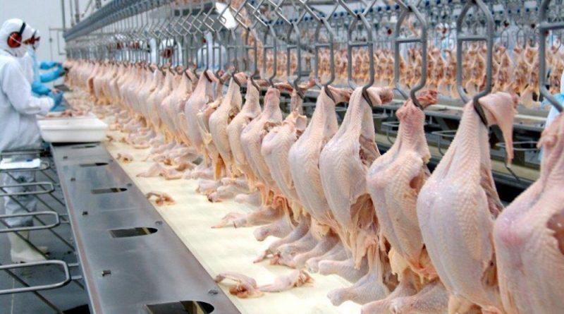 Mercado de Proteína animal: boi, frango e suínos