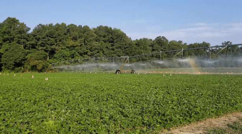irrigação soja