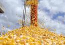 Preço do milho continua subindo em Mato Grosso e saca vai a R$ 30