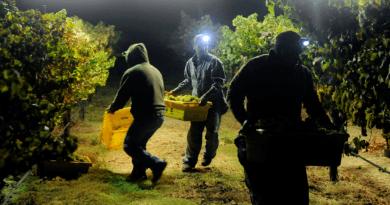 Europa apela para que desempregados ajudem setor agrícola em meio à falta de mão de obra
