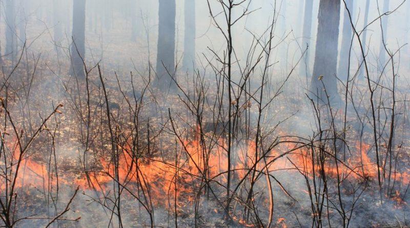 fogo queimadas