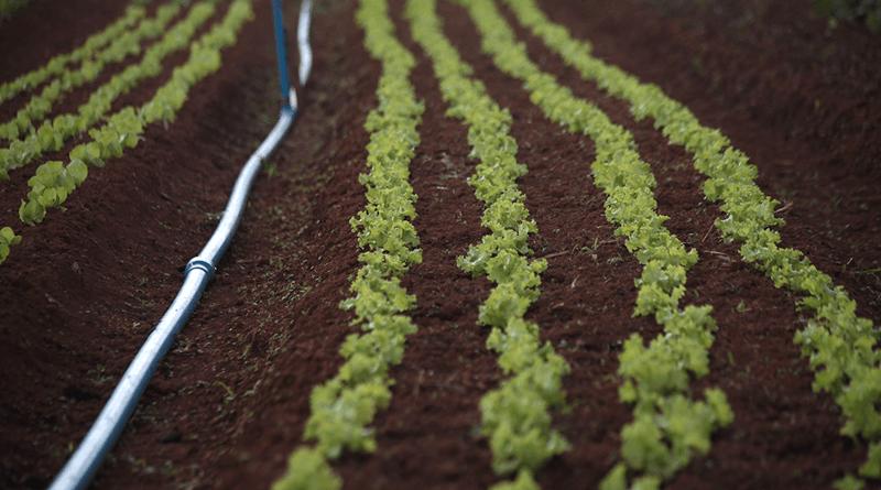 soja irrigação