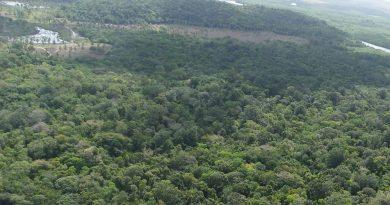 natureza mata meio ambiente floresta