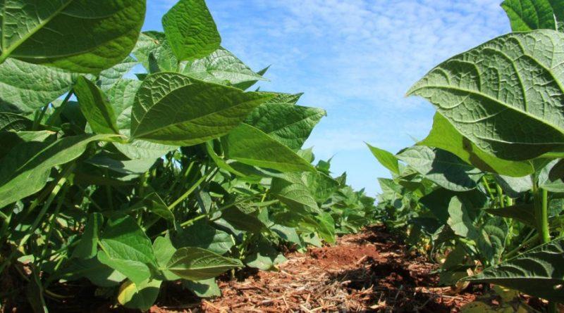 Nutriente que atua na defesa das plantas contra pragas, doenças e outros estresses