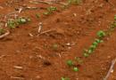 Cascavel/PR vai precisar replantar 22% da área já semeada com soja e falta de água já impacta outros setores