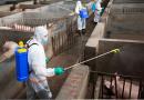 Funcionários de frigoríficos na América do Norte adoecem e afetam mercado