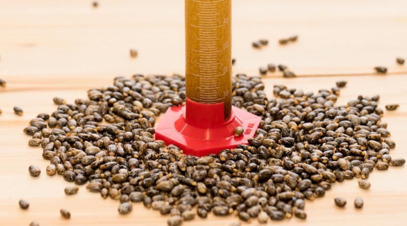 Produto de baixo impacto ambiental poderá ser utilizado como cola e impermeabilizante em vigas de madeira