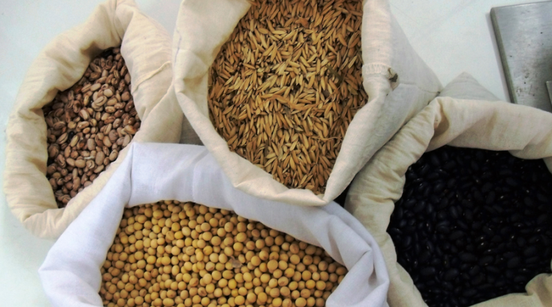 Agricultor tem o direito de usar sementes produzidas na propriedade para o plantio da safra seguinte, diz CNA