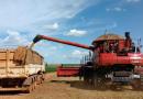 Safra de grãos supera pandemia e mantém alta produção com 251,8 milhões de toneladas