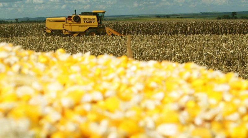Colheita de 2ª safra de milho do Paraná vai a 51%