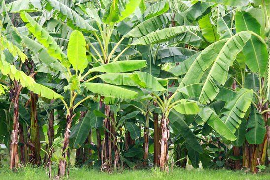 Reunião para plantação de Banana em Juranda
