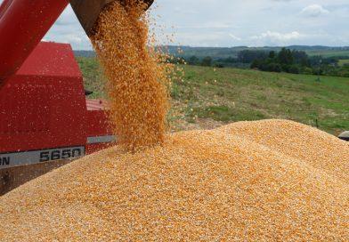 Produção de grãos bate novo recorde