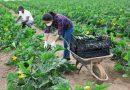MINISTÉRIO DA AGRICULTURA ANUNCIA NOVA PRORROGAÇÃO NA VALIDADE DAS DECLARAÇÕES DE APTIDÃO DO PRONAF