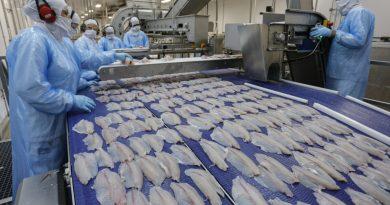 Boletim Agropecuário destaca a exportação de tilápia