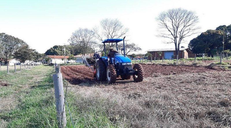 Estudo do IDR-Paraná recomenda plantio direto de mandioca em sistemas integrados